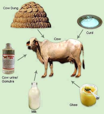 cow_milk_ghee