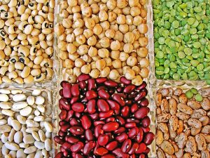 Pulses and Lentils protein