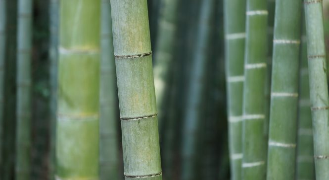 ECONOMICAL AND MEDICINAL VALUE OF BAMBOO