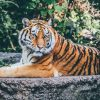 India's Forest Department Is Making A Eco-Tourist Spot