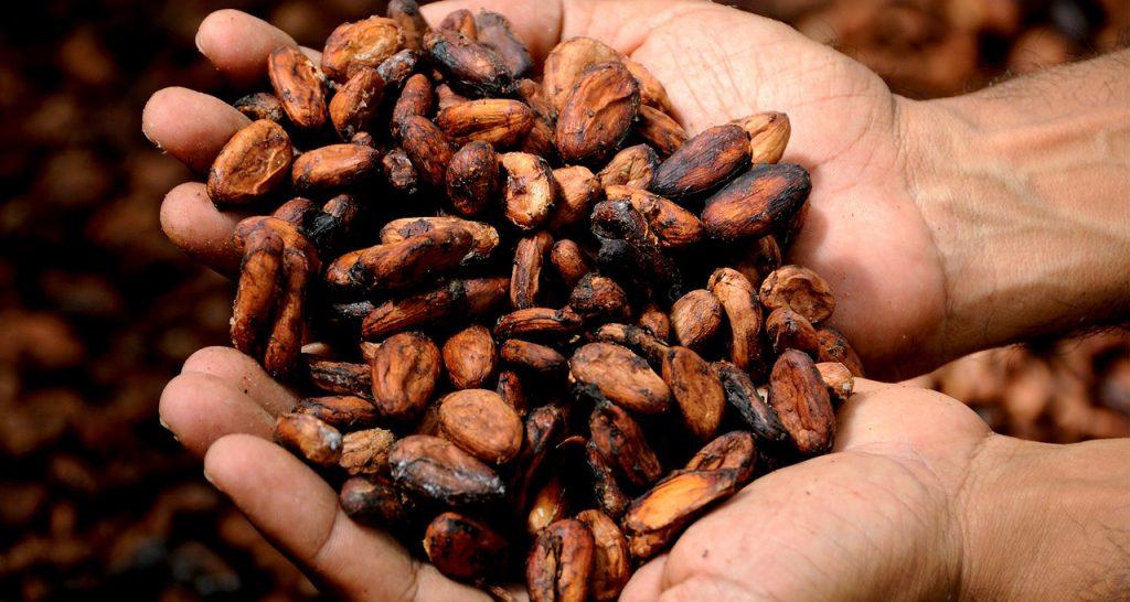 chocolates seed