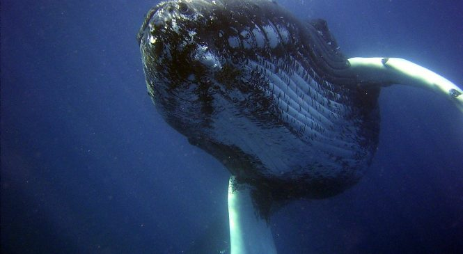 Do You Know About A Four – Legged Whale?