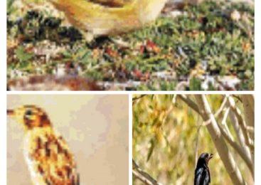 Birds In The Mountain Region Of Ladakh