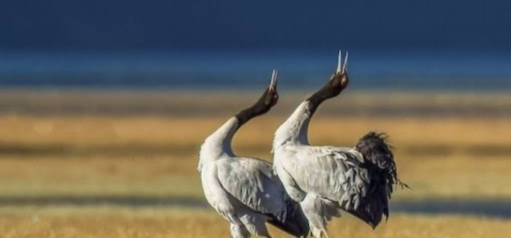 birds in ladakh