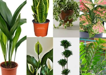 Try These Indoor Plants To Make Your Office Beautiful