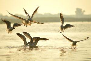Beach of Gujarat