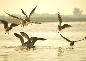 Top 7 Most Beautiful And Natural Beach of Gujarat
