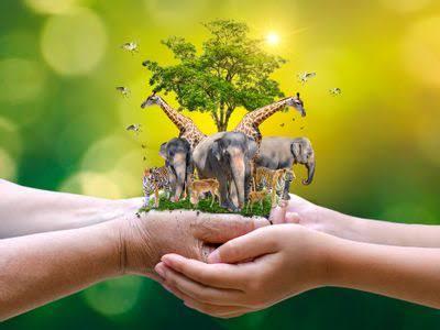 conserve wildlife